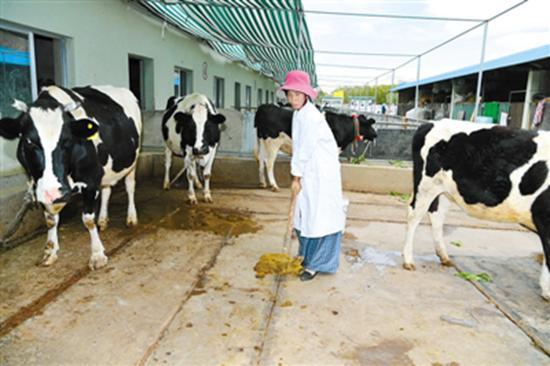 拉萨巴朗村发展养殖业:合作社走出新天地