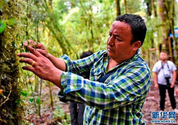 西藏林芝墨脱:产业扶贫带头人次旦扎西