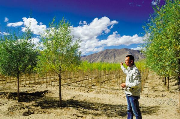 五大功能区 西藏林木良种繁育基地雏形已现