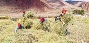 西藏:民族团结一家亲