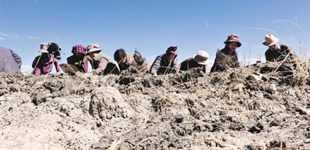 日喀则市桑珠孜区扎实做好春耕备播       为做好今年春耕生产工作,日喀则桑珠孜区边雄乡提前着手,精心安排,组织群众深入田间地头。