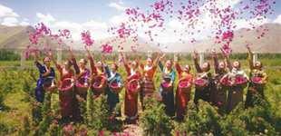 """拉萨:绽放的""""净土玫瑰""""       近年来,拉萨市净土健康产业继续保持迅猛发展势头。"""