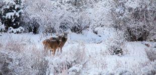 """冬日:西藏最为""""灵动的季节""""       从本期开始,本网将陆续推出""""冬游西藏""""之""""灵动的季节""""系列图片报道。"""