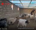《你好,西藏!》第三集�U生�B牧歌 把(ba)青藏高原(yuan)打造(zao)成�槿���(guo)乃至��(guo)�H生�B文明高地。