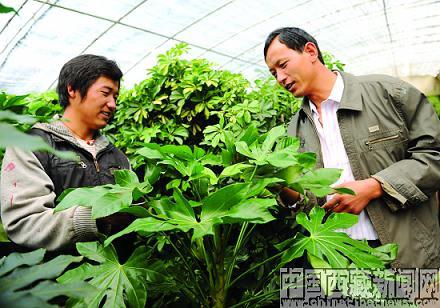 农民工学习花卉种植技术
